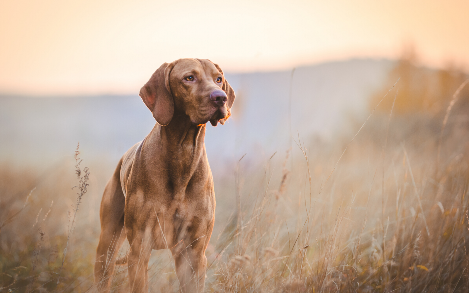 Turėtume prisiminti senuosius šunų mitybos įpročius