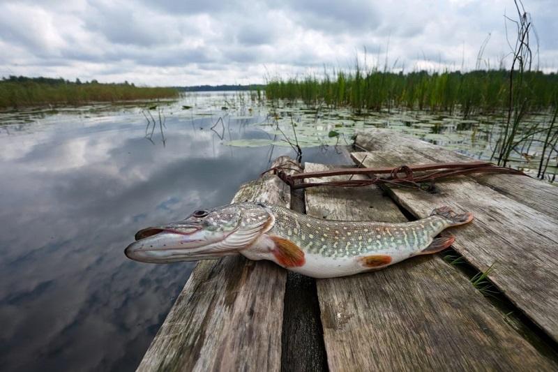 Alytaus rajono ežeruose – daugiau žuvų