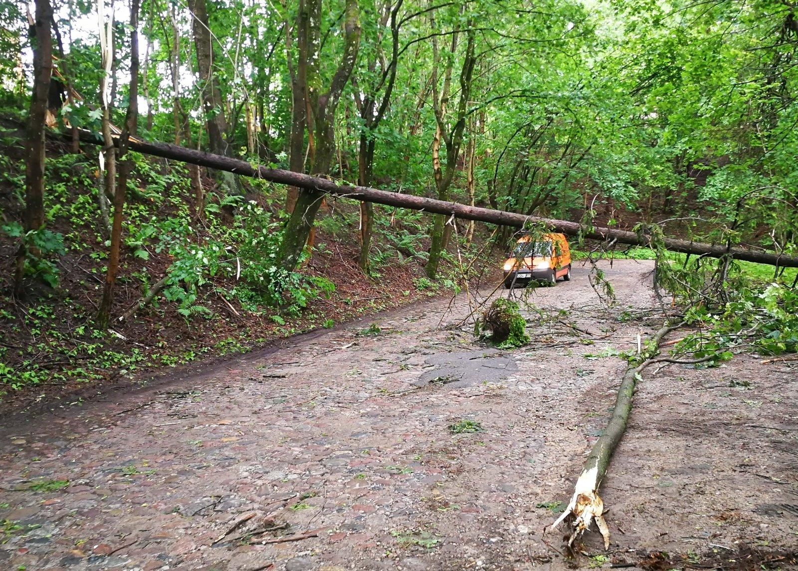 Ugniagesiai per parą 18 kartų vyko šalinti nuvirtusių medžių