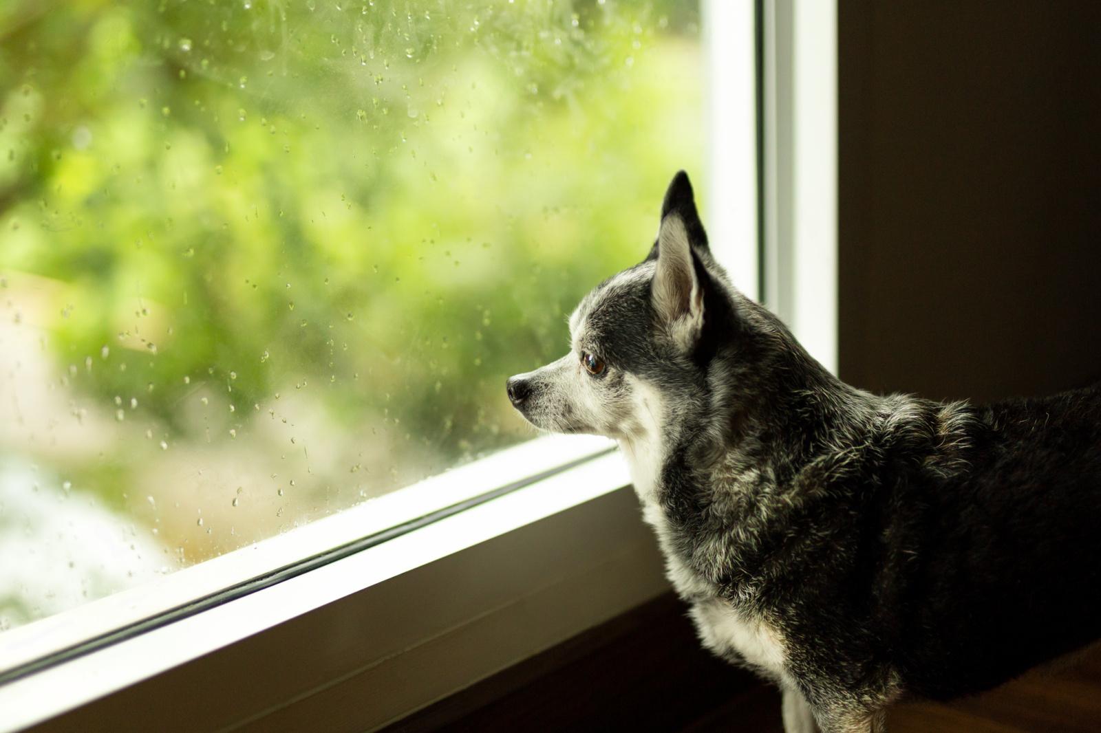 Orai: karščius kuriam laikui pamiršime
