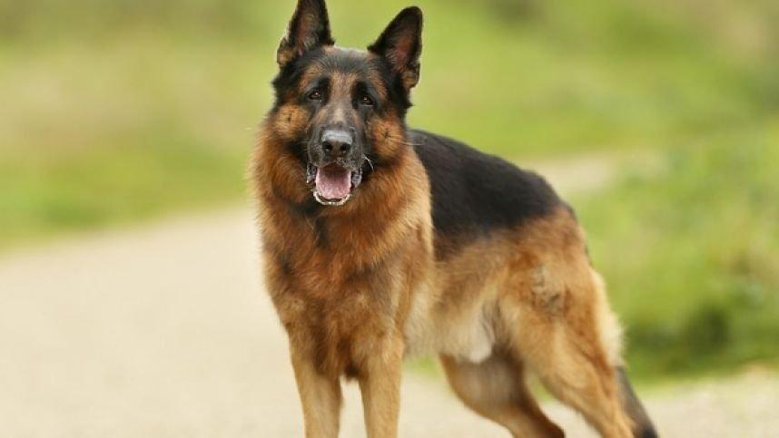 JAV mirė pirmasis šuo, kuriam diagnozuotas COVID-19