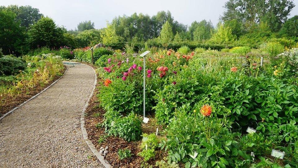 Šiaulių universiteto Botanikos sodo augalams skiriamas ypatingas dėmesys (vaizdo reportažas)