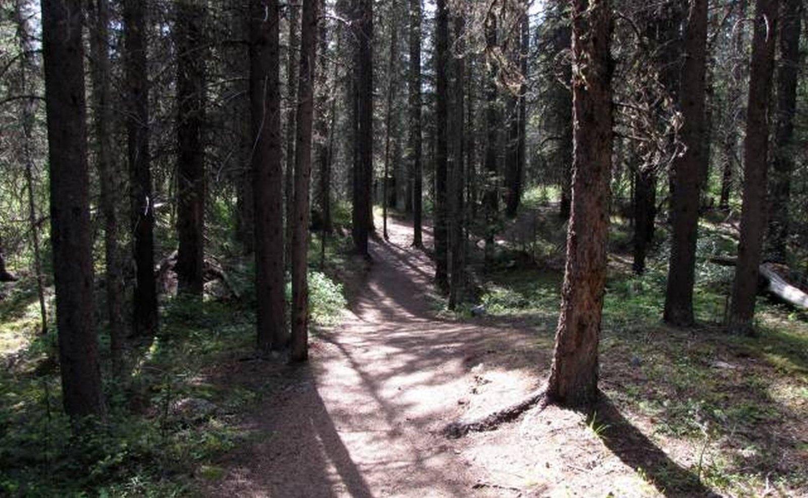 Ribojamas lankymasis Varėnos rajono miškuose
