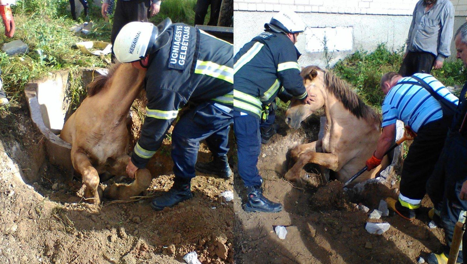 Krakių ugniagesiai išgelbėjo į šulinį įkritusį arklį