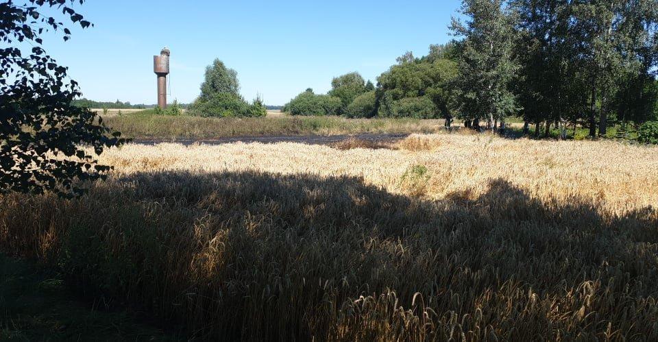 Alytaus rajone javų lauke kilęs gaisras galėjo pražudyti ir sodybą, ir fermos pastatus