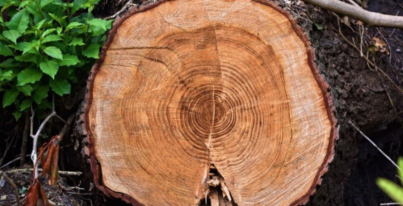 Medžių rievės atskleidė niūrą anomaliją, kuri prasidėjo XX-ajame amžiuje