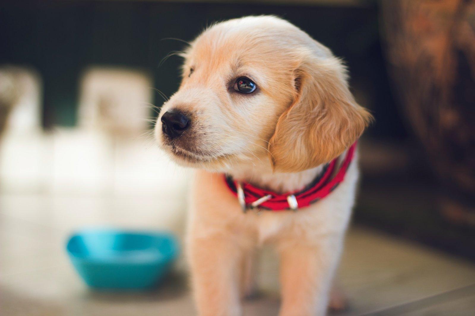 Parlamentarai siūlo griežtinti gyvūnų veisimo taisykles, bausmes už žiaurų elgesį