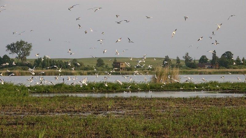 VSTT: medžioklė yra leidžiama trečdalyje Žuvinto rezervato teritorijos