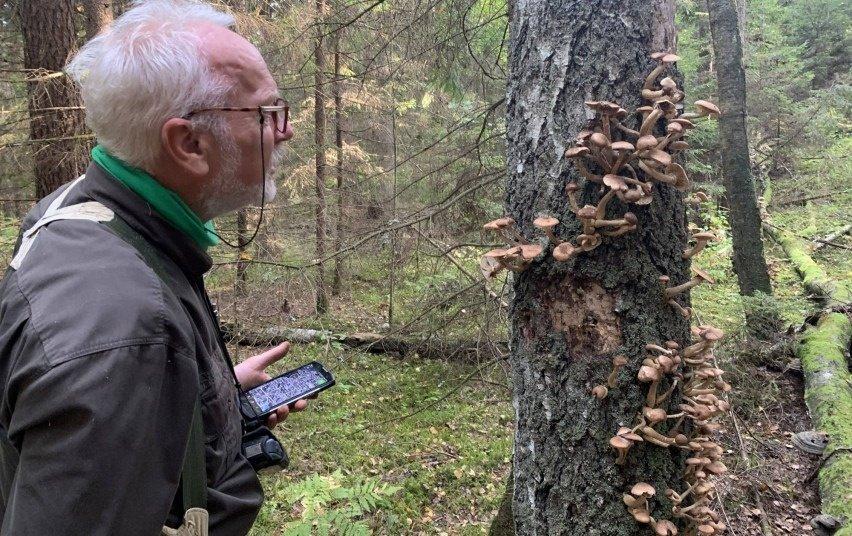 Labanoro girioje – naujos saugomų rūšių radavietės