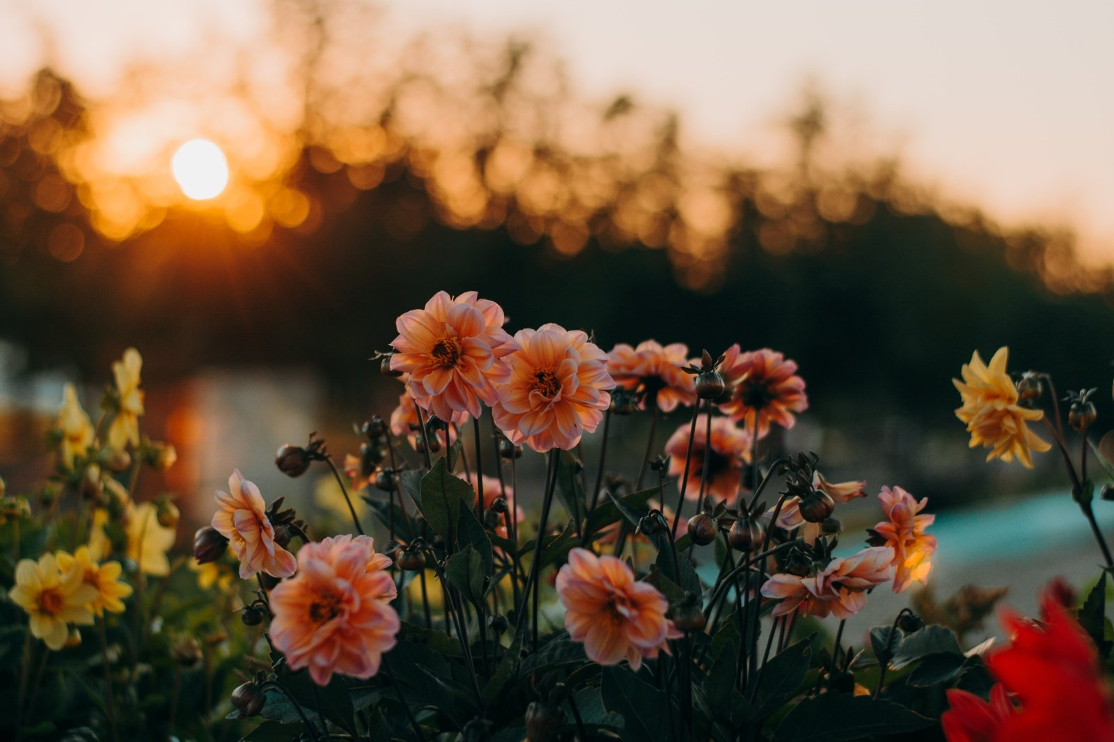 Dėl klimato kaitos gėlės visame pasaulyje keičia savo spalvas