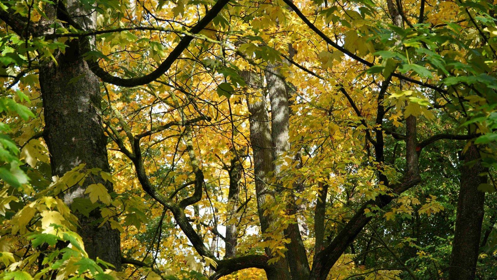 Seimas spręs dėl baudų padidinimo už nelegalias tvoras, niokojamą miško paklotę ir nuotekų tvarkymą