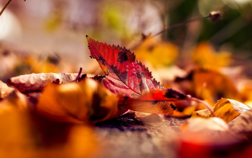 Aplinkosaugininkai įspėja: deginti nukritusius lapus svarbu atsakingai