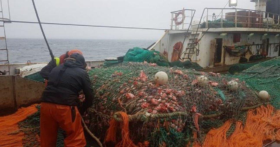 Okeaninė žvejyba: nulinė ešerių kvota, krevetes jau leista gaudyti