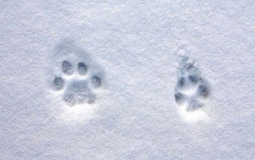Priminimas medžiotojams: privalu atlikti medžiojamųjų gyvūnų apskaitą
