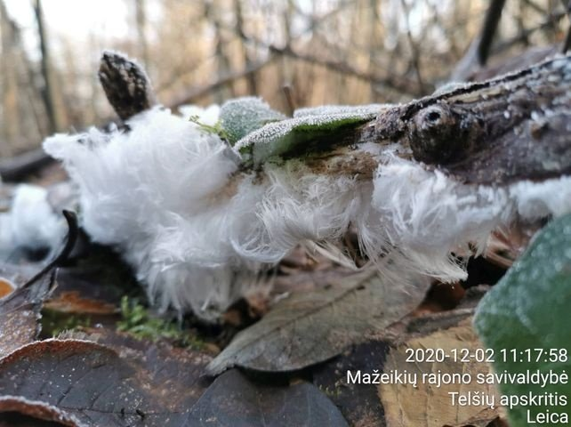 Užfiksavo tikrą gamtos stebuklą – įspūdingus ledo plaukus