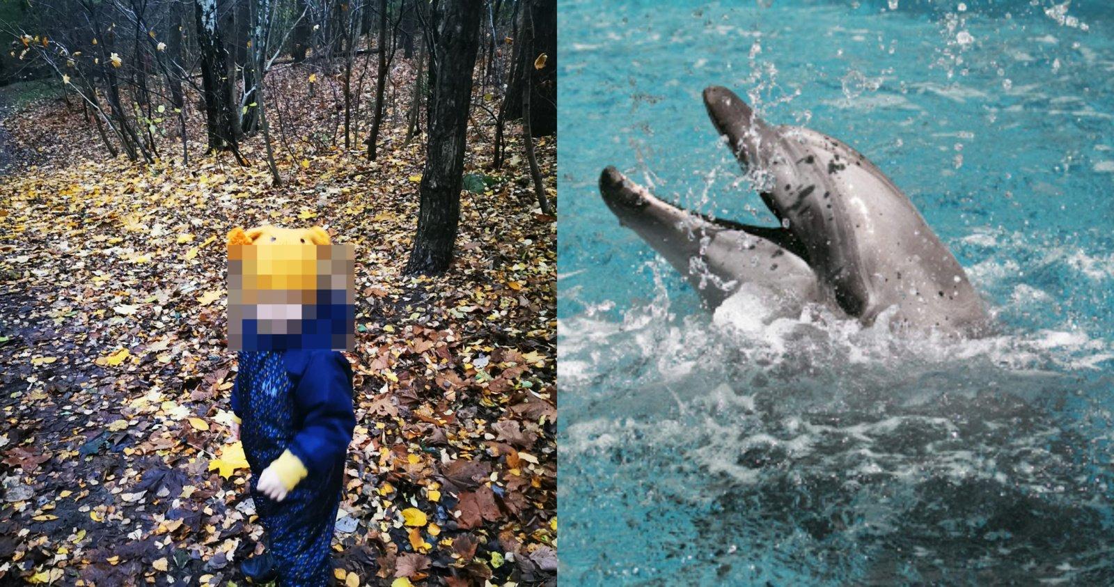 Neįgalų vaiką auginančios šeimos viltis – delfinų terapija: prašo prisidėti prie svajonės išpildymo