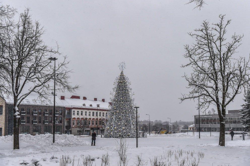 Kalėdinė eglė panevėžiečius džiugins iki vasario
