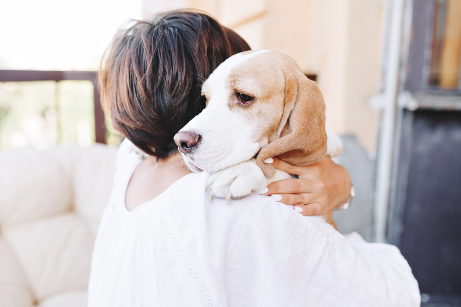 Šunų ausų ir uodegų trumpinimas –  kokia bausmė gali laukti?