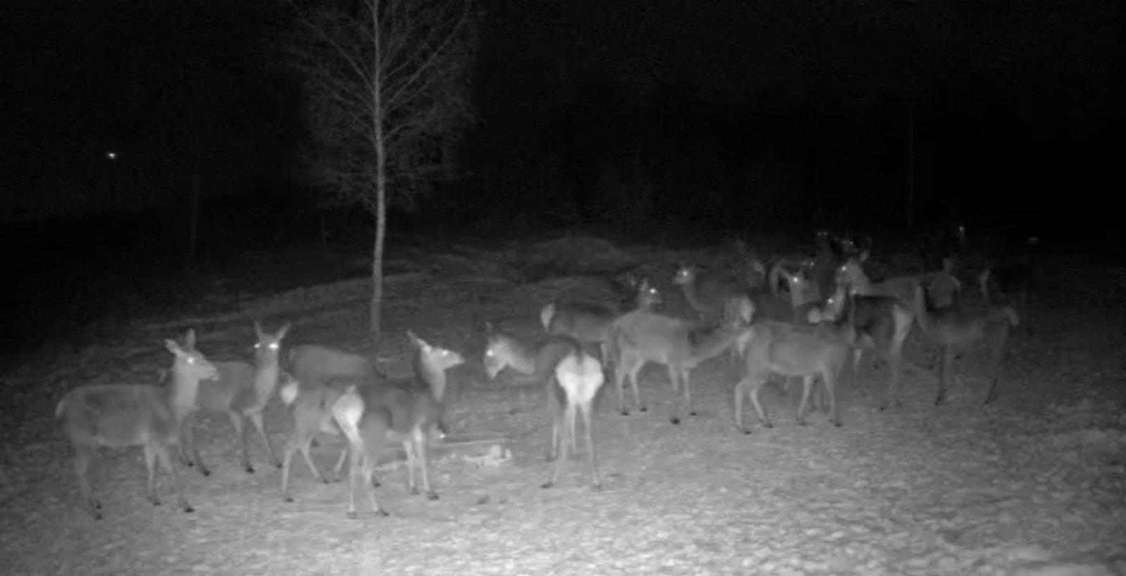 Į pagalbą žvėreliams skuba medžiotojai
