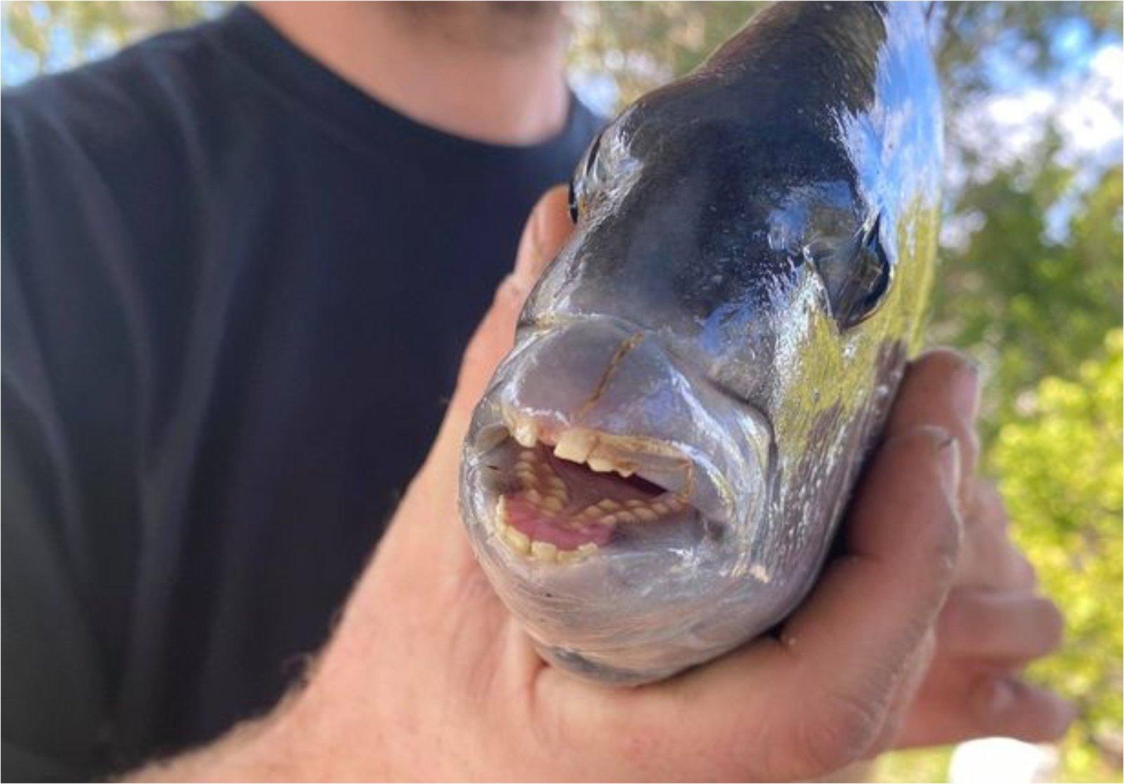 Žvejys kaip reikiant nustebo: sugavo žuvį su į žmogaus panašiais dantimis