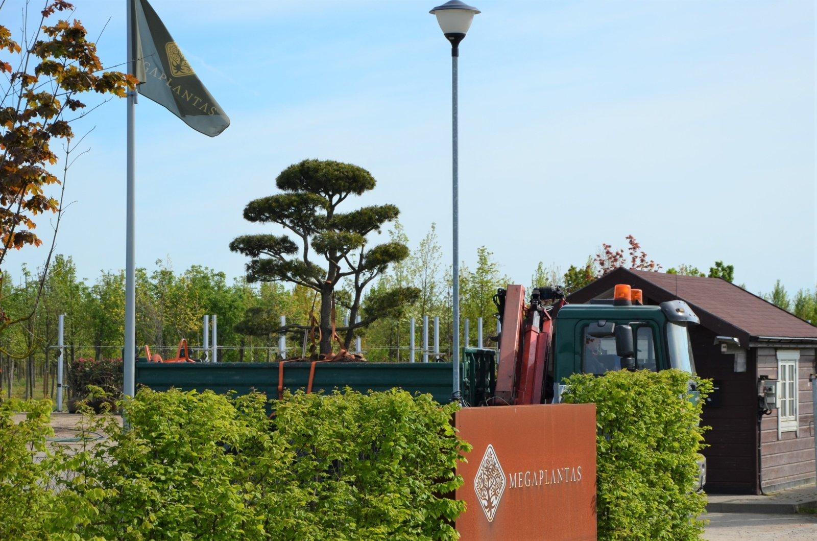 """Dešimtmetį skaičiuojantis """"Megaplanto"""" medelynas pavasario darbų sezoną pradeda su naujais iššūkiais"""