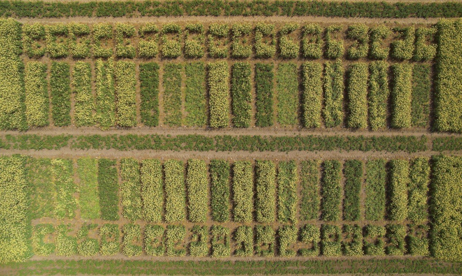 Apklausa parodė žemdirbių elgseną: prieš saugodami pasėlius, pirmiausia išsiaiškina žalų vertinimo metodikas