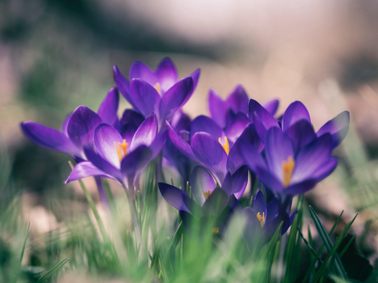 Balandžio 16-oji: vardadieniai, astrologija