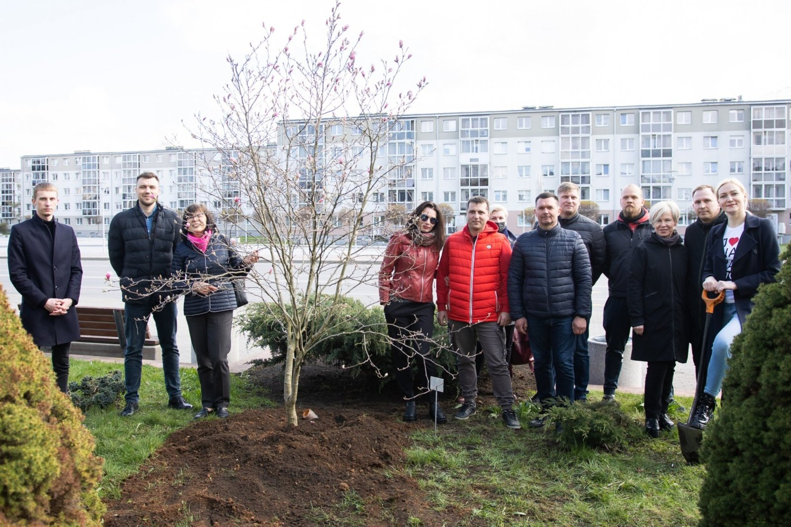 Dovana Jonavos miestui – įspūdinga magnolija