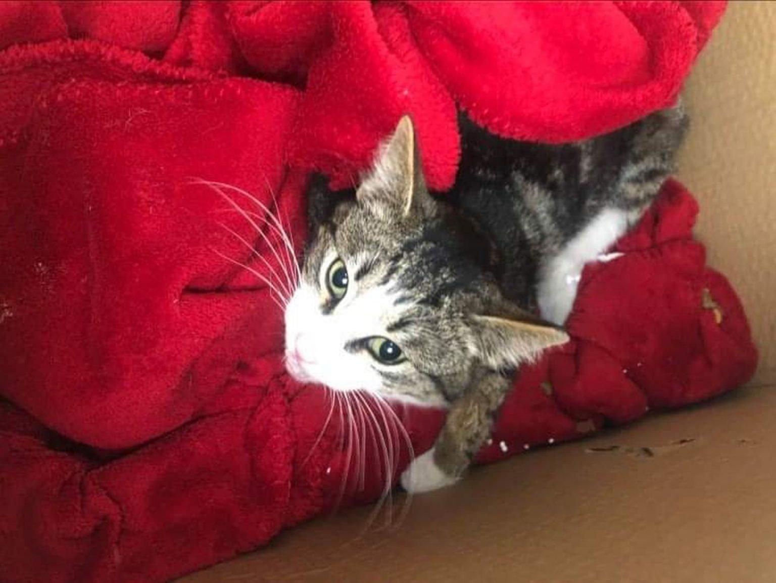 Širdį verianti istorija: sužeistą katę išgelbėti norėję kauniečiai susidūrė su prieglaudų abejingumu