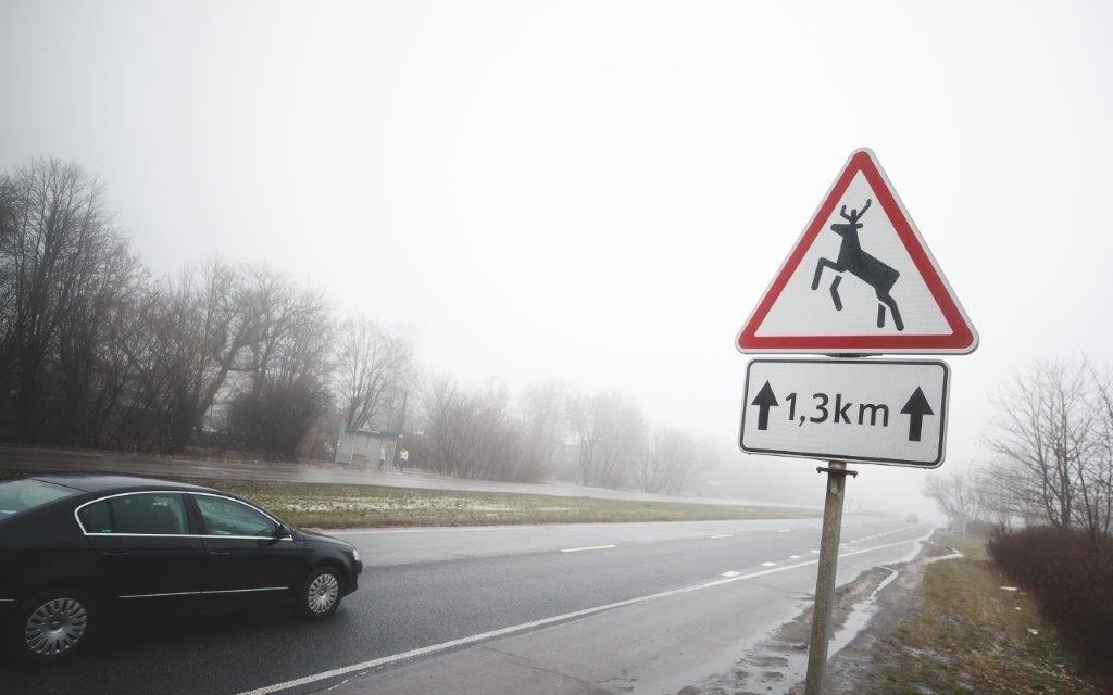 Utenos rajone lengvasis automobilis partrenkė stirną