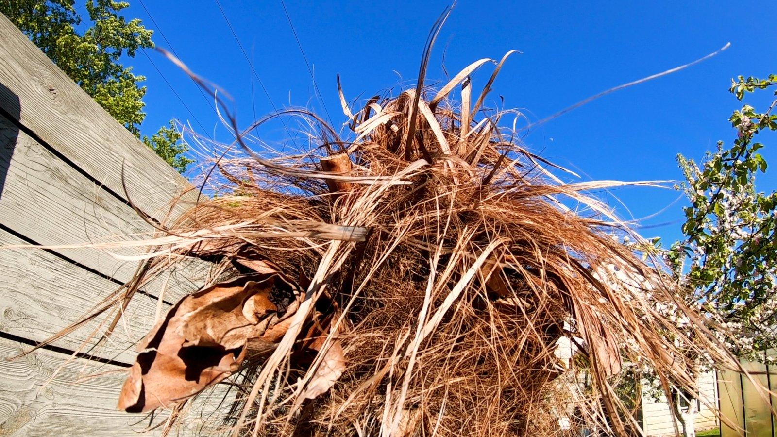 Daina Bosas pakilo į kovą su neišgyvenusių palmių pardavėjais: grąžinti pinigų dabar jau nebeužteks