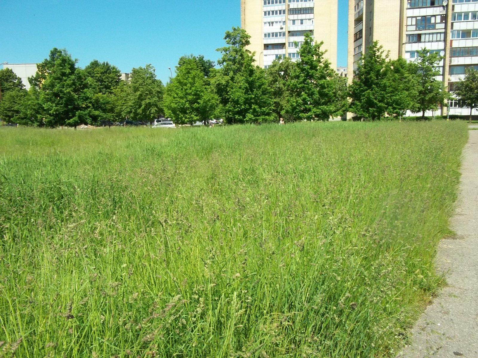 Nenupjauta žolė kelia pavojų žmonių sveikatai