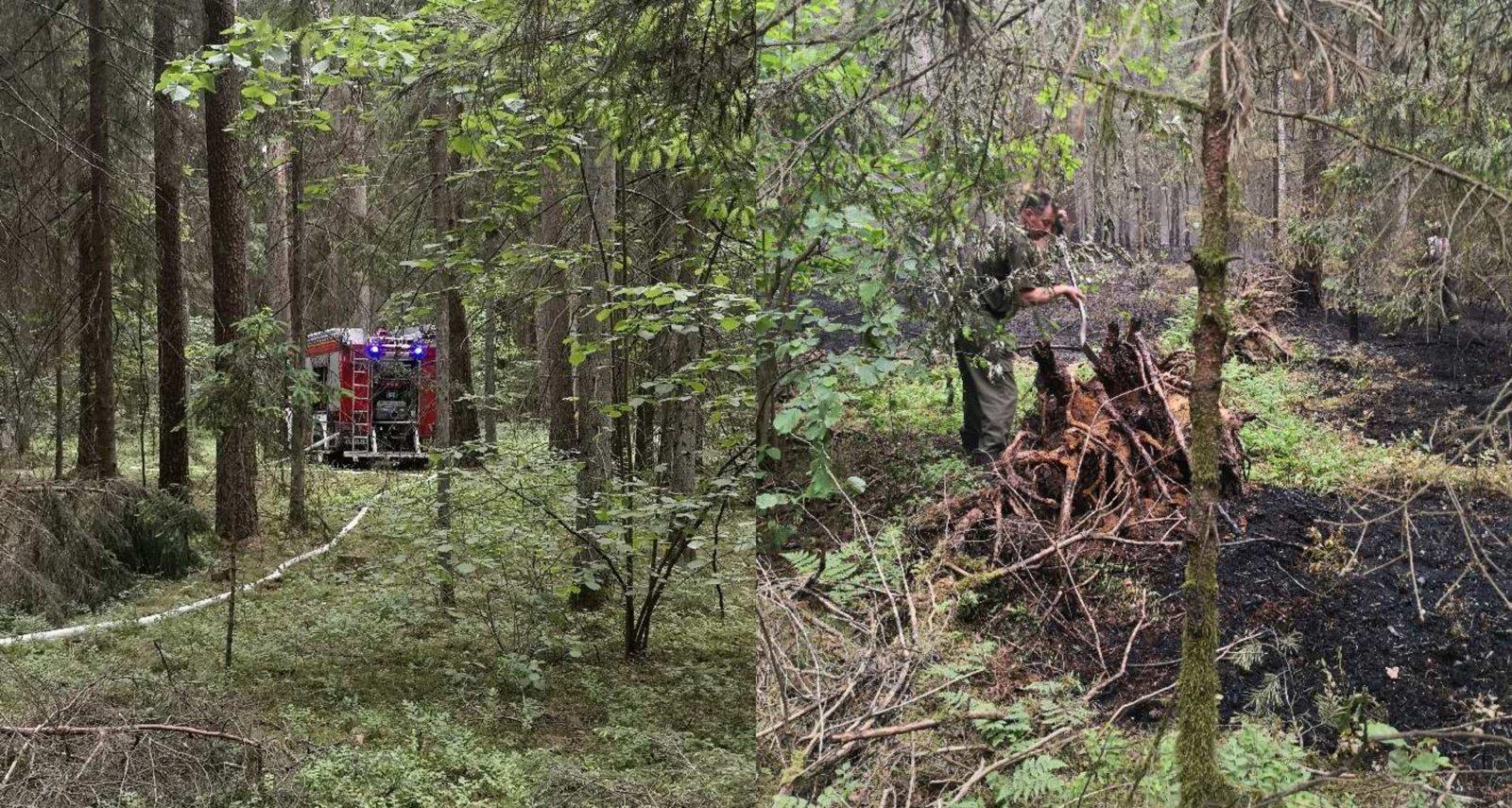 Prienuose liepsnojo miškas: spėjama, jog gaisrą sukėlė neatsargus žmogaus elgesys