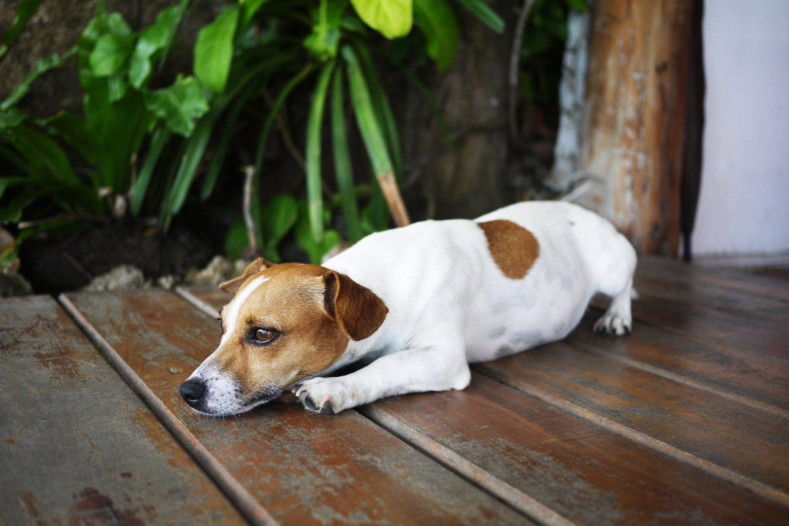Įspėja augintinių šeimininkus: vasaros karščiai gyvūnams gali būti mirtinai pavojingi