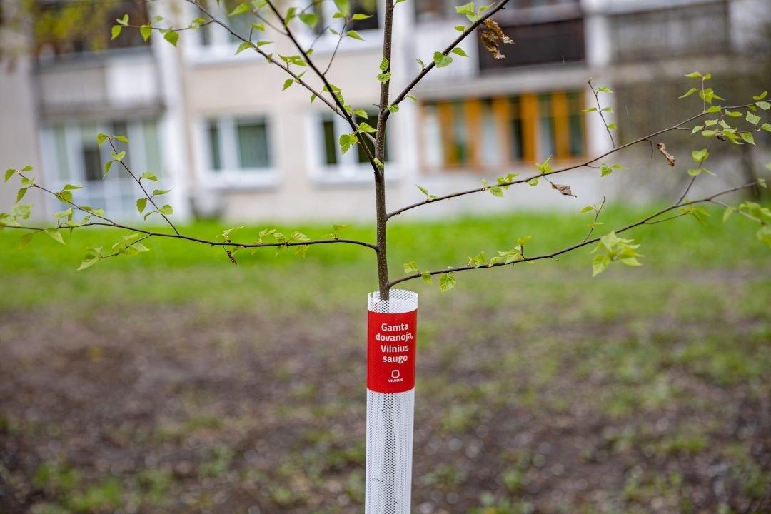 Per pusmetį Vilniuje pasodinta tūkstančiai sodinukų