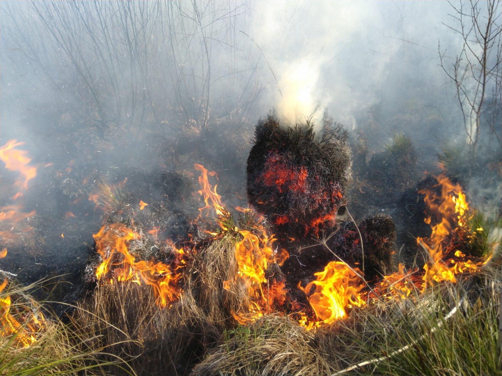 Miškininkai įspėja dėl didelio miškų gaisringumo