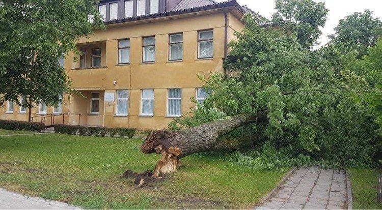 Dėl audros apie 5 tūkst. namų ūkių – be elektros, ugniagesiai 90 kartų vyko šalinti medžių