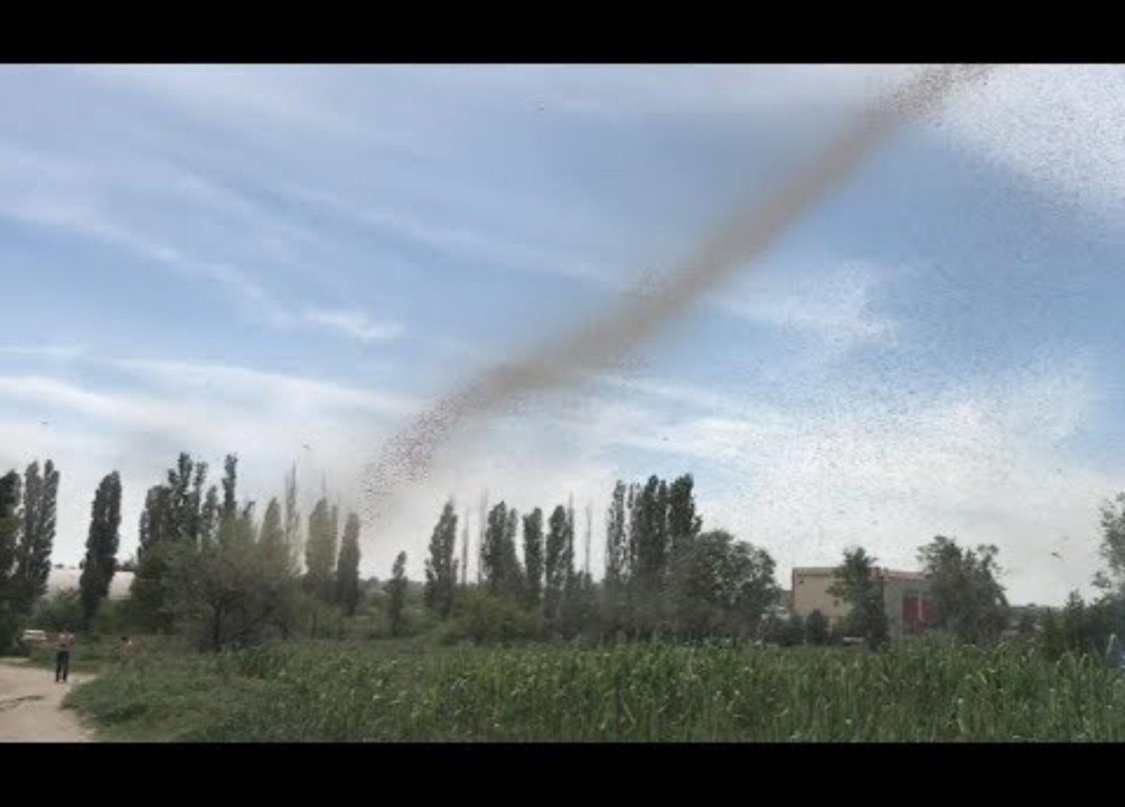 Užfiksavo gluminantį reginį – uodų tornadus (vaizdo įrašas)