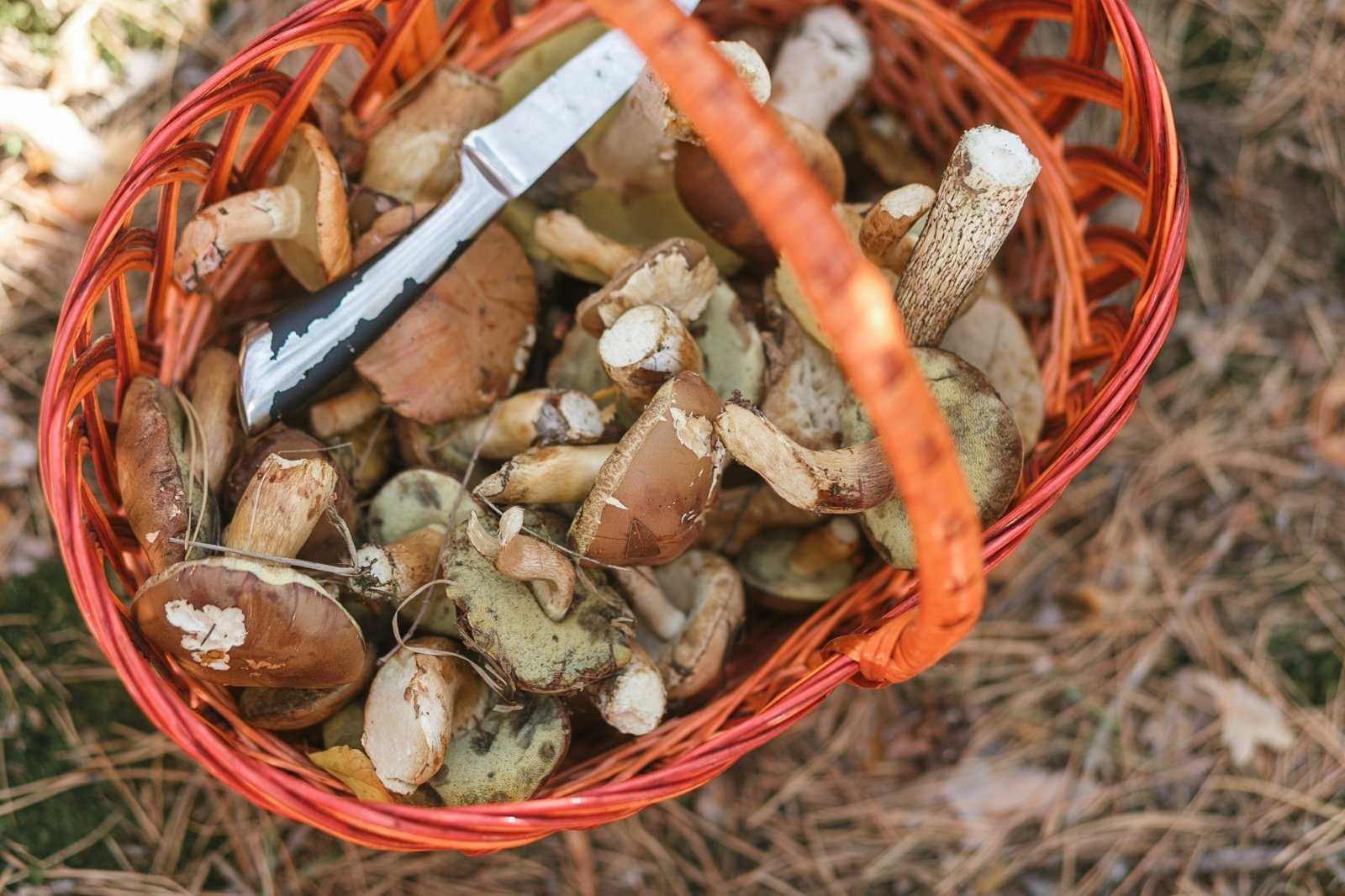 Didėja grybų ir miško uogų importas iš trečiųjų šalių