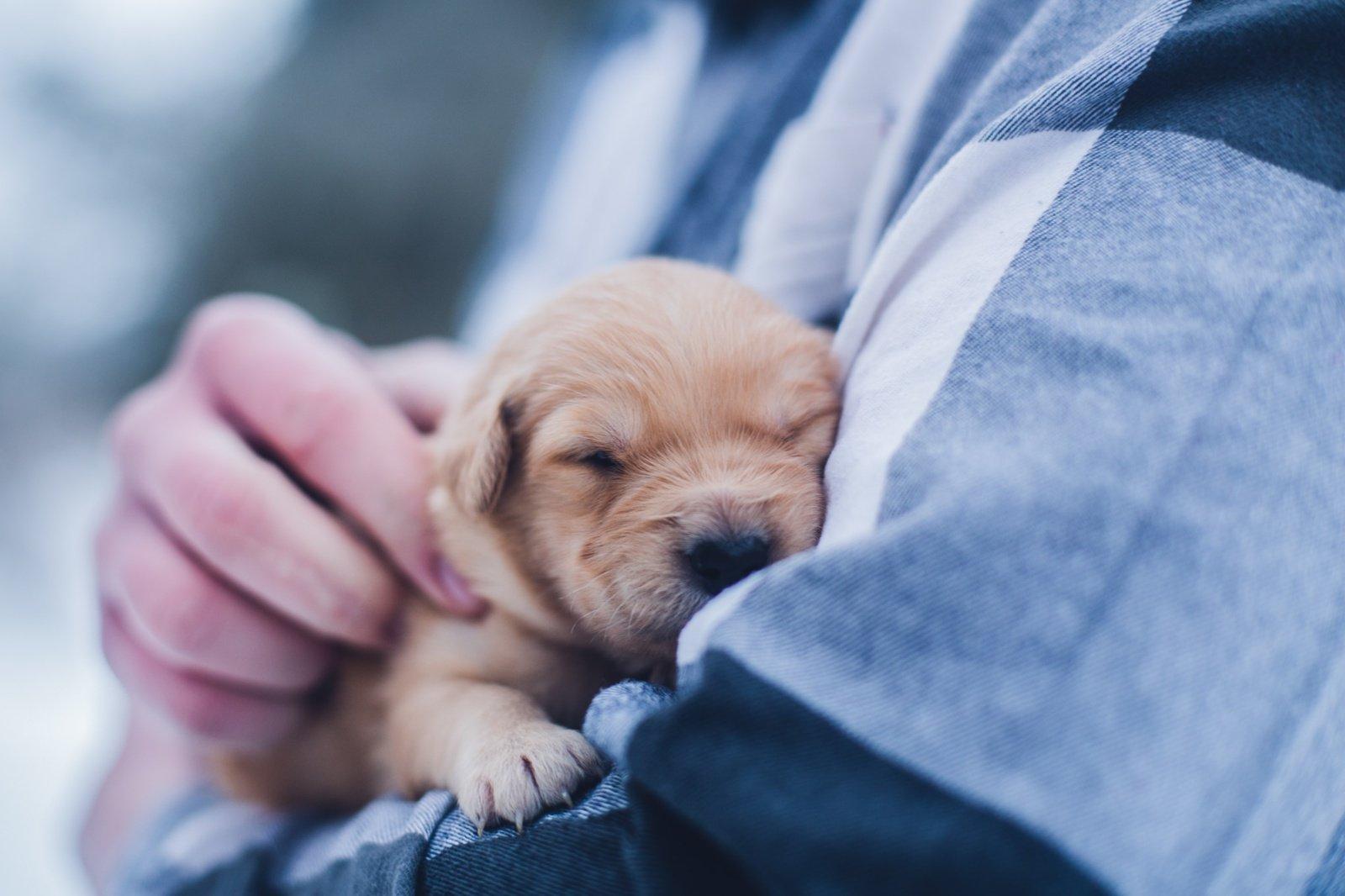 VMVT inspektoriai ir policija užkardė nelegalios prekybos šunų jaunikliais atvejį