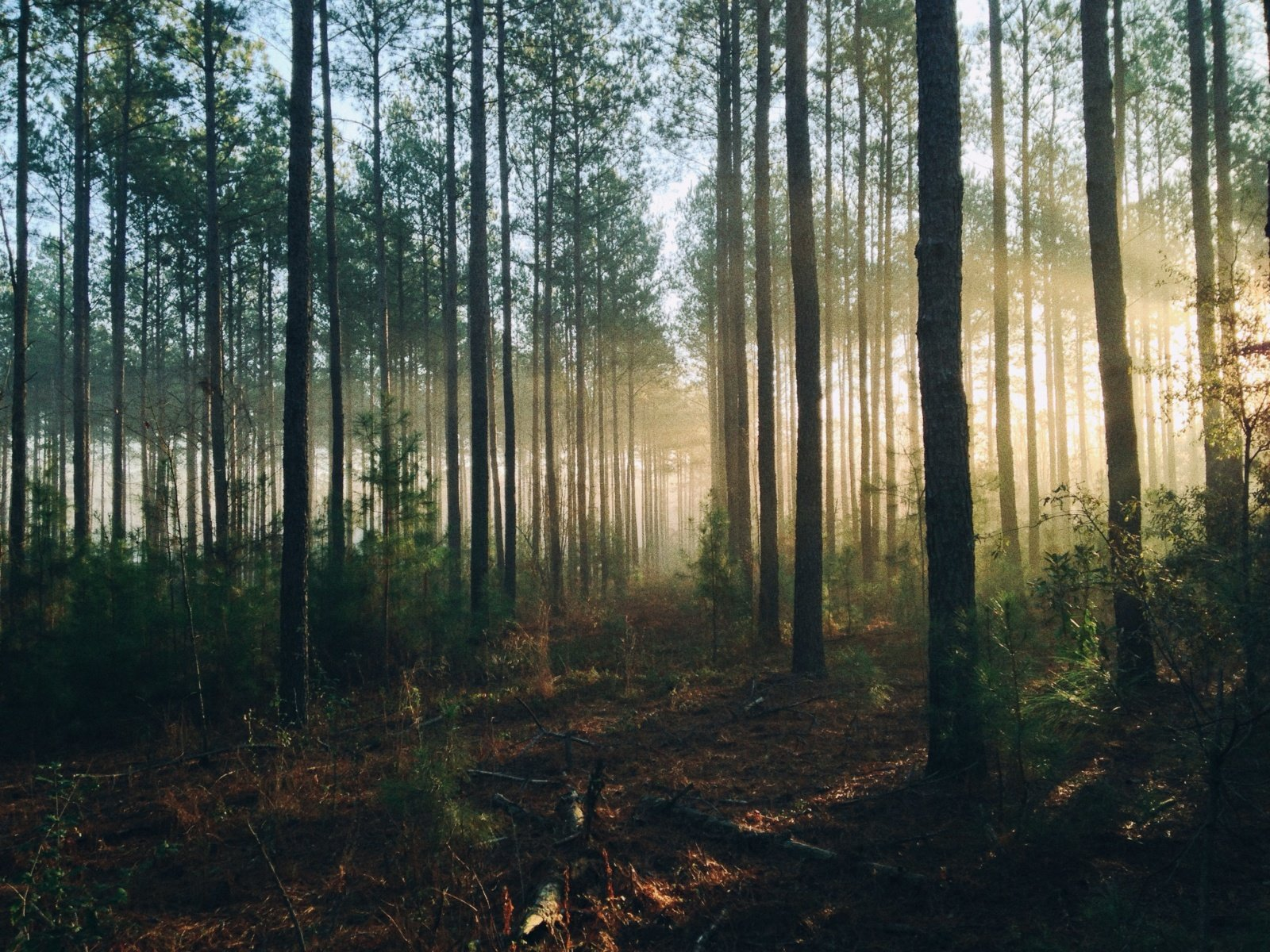 Praėjusią savaitę apie galimus aplinkosauginius pažeidimus gauta 480 pranešimų