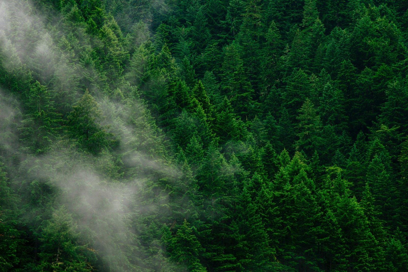Nustatyta, kad miškai padeda kurti debesis ir taip vėsina Žemę