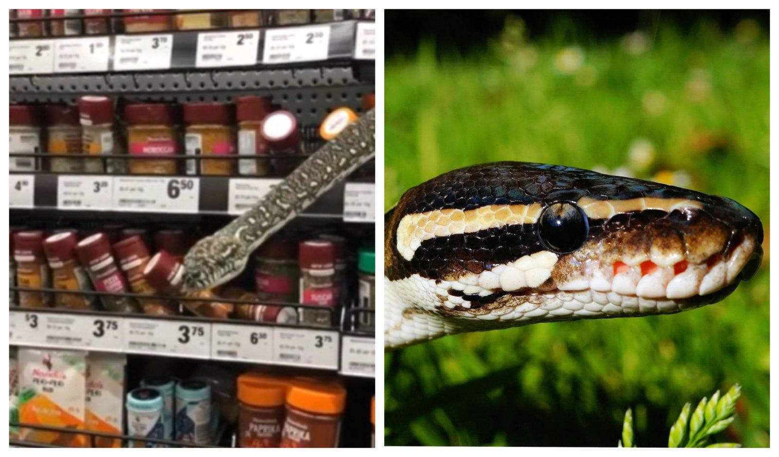 Moteris to nesitikėjo: parduotuvės lentynoje išvydo gyvatę