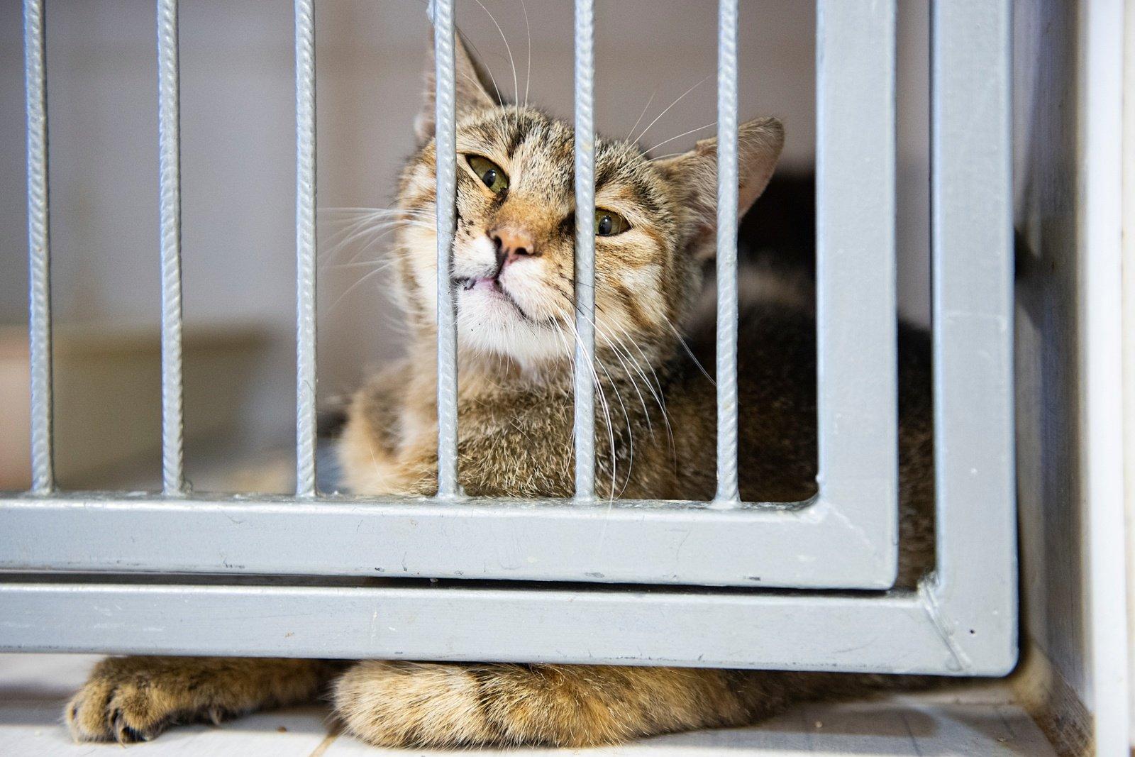 Gyvūnų globos namai  iš arti: iš baimės drebančios rankos, beglobių likimai ir kasdienė viltis
