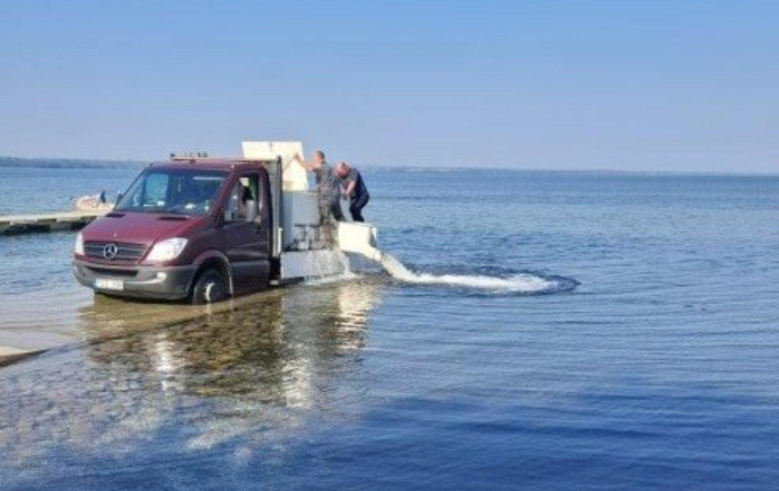 Žuvinami Lazdijų krašto ežerai: į juos išleista daugiau kaip 10 tūkst. šių metų lydekaičių