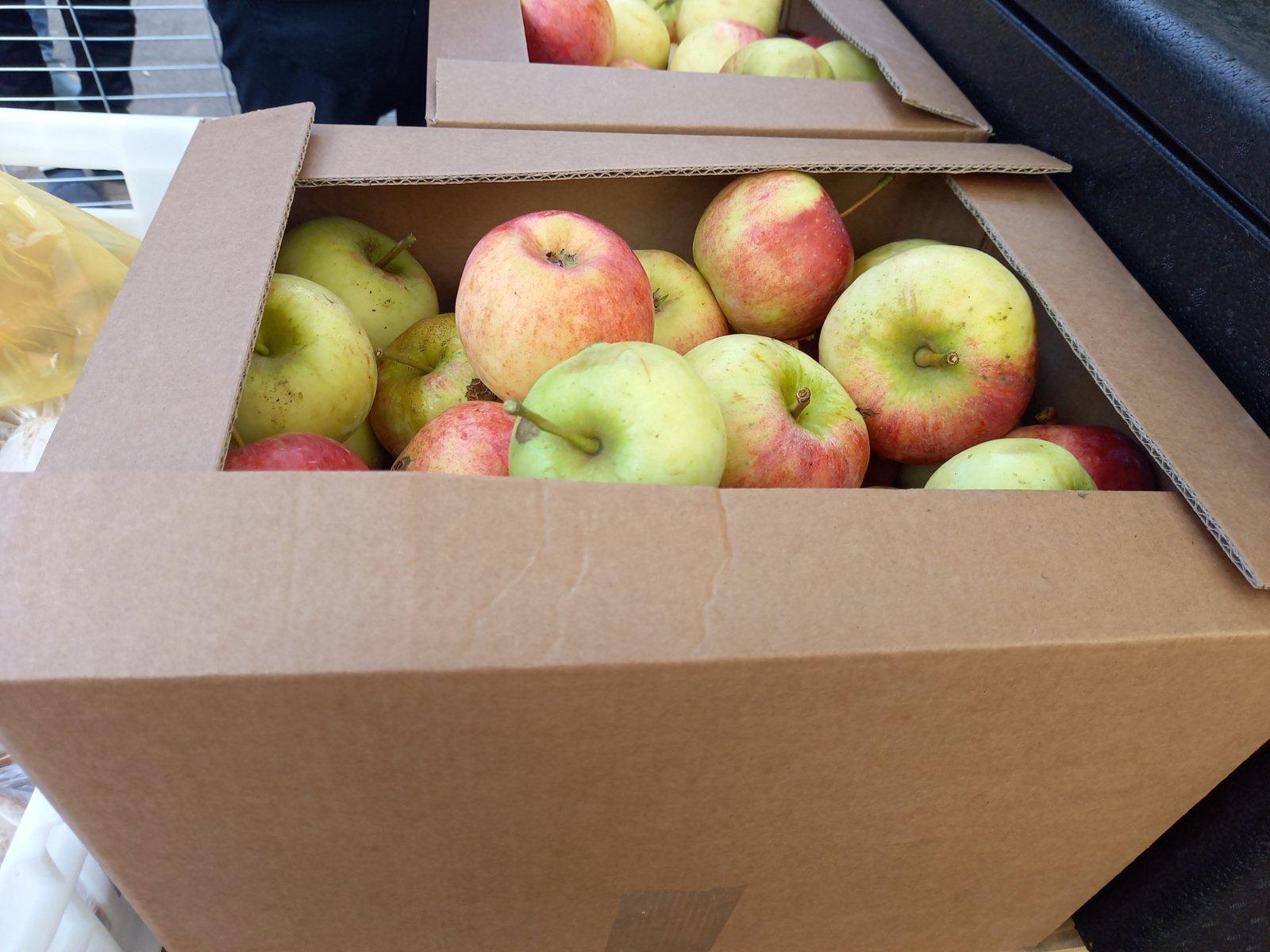 Alytaus verslas migrantus pavaišino obuoliais
