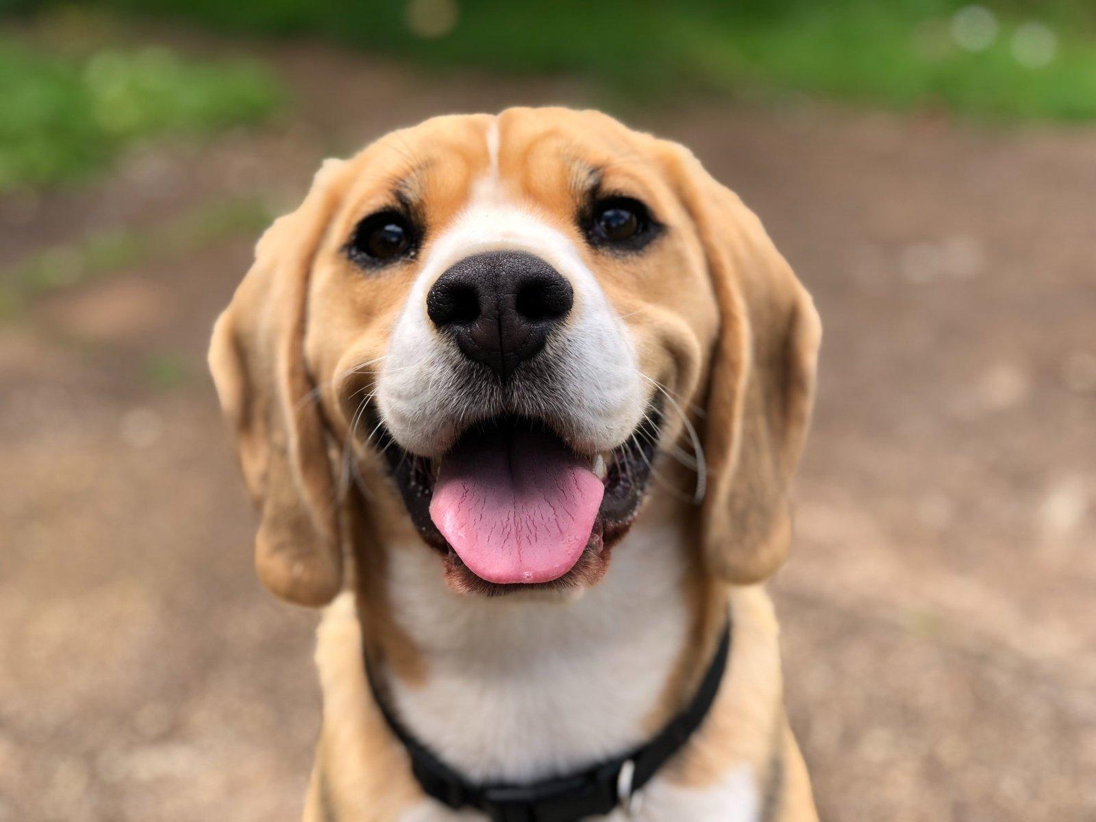 Seimas nesiėmė reguliuoti šunų dresūros