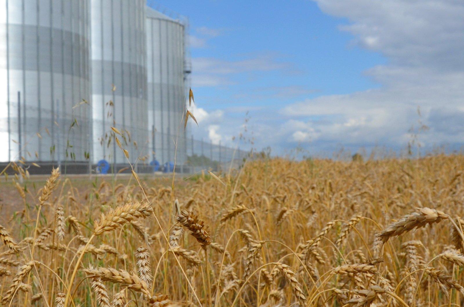 Prastesnis grūdų derlius turės įtakos maisto produktų brangimui