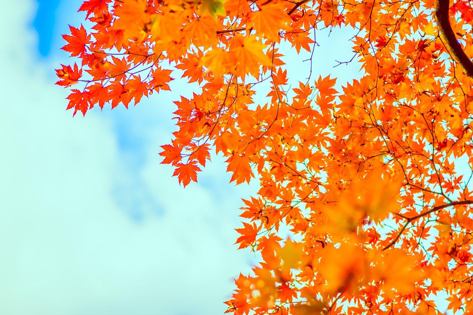 Orai: savaitės pradžia bus graži, vėliau – pokyčiai