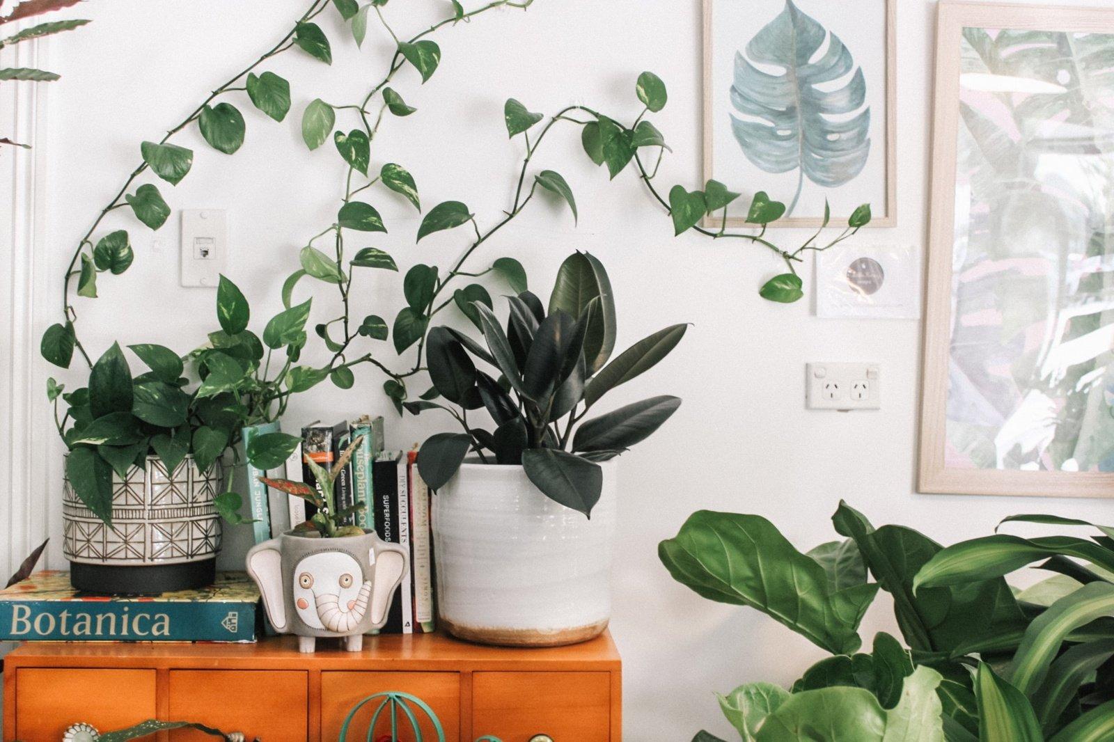 Žalioji oazė namuose – kaip išsirinkti kambarinius augalus ir juos prižiūrėti?